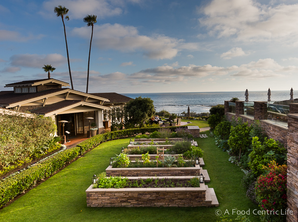 Studio herb garden at Montage Resort and Spa, Laguna Beach, California, USA